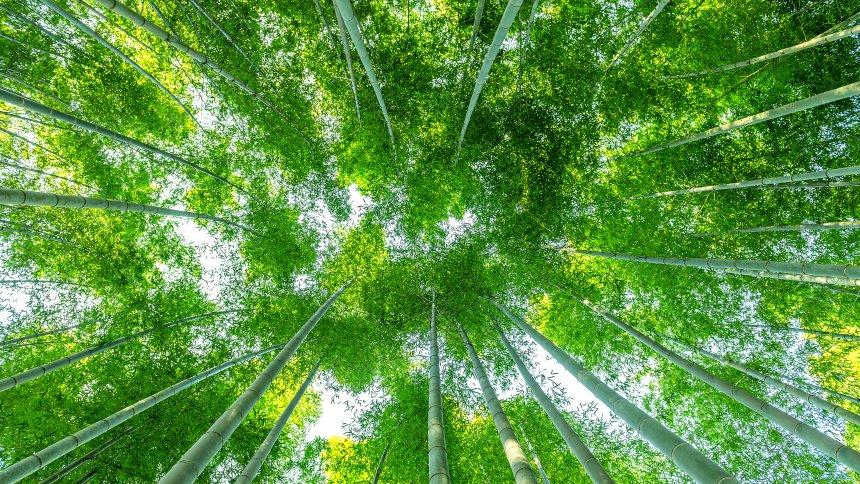 Zöld takarítás